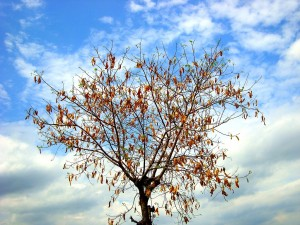 1024px-A_tree_in_autumn_season--300x225