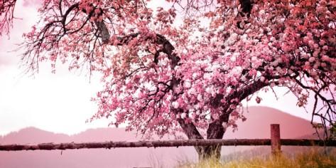 Photo courtesy of Shutterstock.