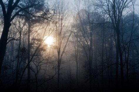 morning-sun-and-mist