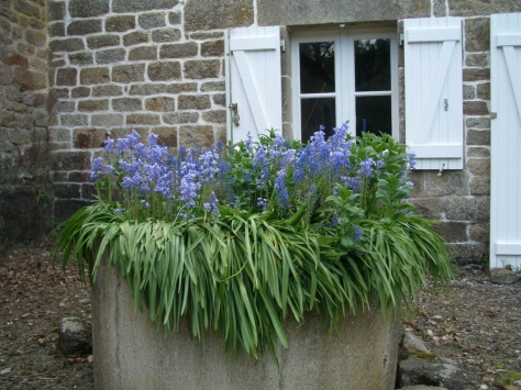 Brittany At Home With the Bluebells