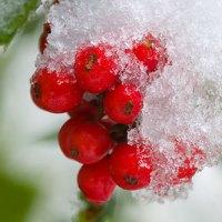 Recuperando la Navidad - vayamos de fiesta como Paganos